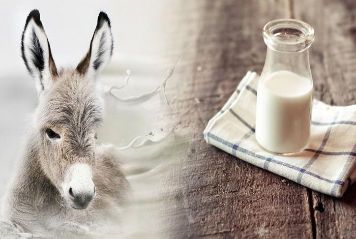 Олени молоко картинка